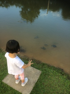Counting the number of terrapins in the pond in Sengkang Riverside Park