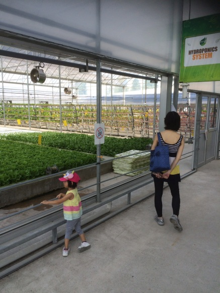 Looking at the Hydroponics system