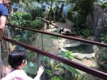Watching the panda napping