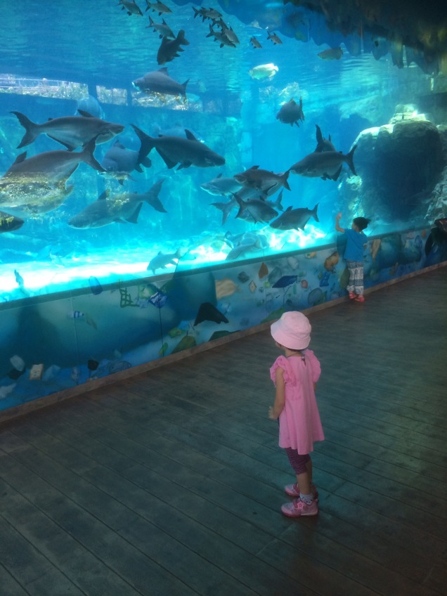 Watching all the big fishes swimming